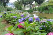 힐링공간으로 '여름 꽃 활짝' 핀 논산시민공원